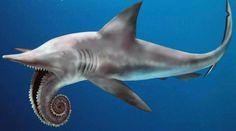 Ten Rare Shark Species - Page 2 of 2 - Listupon
