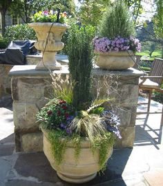Rosemary topiaries in pots for fall and winter-LOVE THEM!!!