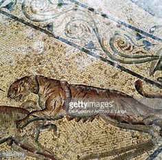 Tiger, detail from the mosaic floor in the frigidarium of the Roman villa, ancient city of Lilybaeum, Marsala, Sicily, Italy. Roman civilisation, 2nd-3rd century AD.