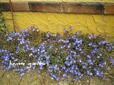 キヨミのガーデニングブログ Summer Garden, Horticulture, How To Dry Basil, Planting Flowers, Herbs, Green, Plants, Gardening, Image