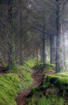 isle of arran,  scotland  i think i'd be running as fast i can through this spooky scary forest path