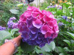 Victoria Sanchez S Garden