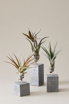 Luftplanzen Set als schöne Tisch-Dekoration oder Wohndeko, Betonvase für Pflanzen // concrete planter for air plants made by Evrgreen via DaWanda.com