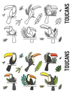 Toucan Tropical Doodle Clipart Kids Calendar, School Calendar, Calendar Ideas, Bujo Doodles, Calendar Doodles, Bullet Journal Ideas Pages, Bullet Journal Inspiration, Doodle Drawings, Doodle Art