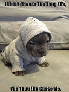 ♡ Baby Pitt Bull – Sembra un cucciolo di foca! Cute Funny Animals, Cute Baby Animals, Animals And Pets, Cute Dogs And Puppies, I Love Dogs, Doggies, Cute Pitbull Puppies, Pit Bull Puppies, Cockapoo Puppies