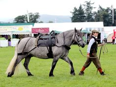 Highland Pony Showing – Blair Castle International Horse Trials Pony Breeds, Horse Breeds, Hackney Horse, Highland Pony, Horse Harness, Draft Horses, Horse Pictures, Horse Care, Show Horses