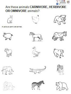 1000+ images about Science-Food Chain on Pinterest   Food chains, Food ...
