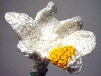 2000 Free Amigurumi Patterns: White Fresia Flower Crochet Pattern