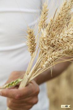 Tarjeta d embarque: Hierba de trigo {Germinando en casa}
