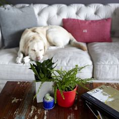 nothing better then a sleeping puppy and happy houseplants.