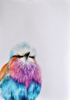 Original Colored Pencil Bird Drawing - Lilac breasted Roller from Africa. Colored Pencil Artwork, Coloured Pencils, Color Pencil Art, Bird Drawings, Animal Drawings, Flower Drawings, Drawing Animals, Pencil Drawings, Lilac Breasted Roller