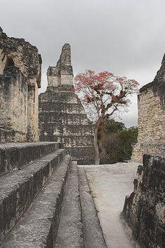 Guatemala-Tikal #conozcamosguate