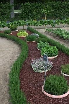 herb garden with rosemary hedge - planting herbs in buried buckets keeps herbs from taking over by estela