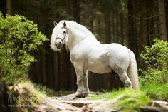 Percheron - Pferdefotografie, Hundefotografie, Fotografie Bettina Niedermayr Pferde - Mensch & Pferd - Hunde- Portrait - Stallschilder - Kalender, Pferdekalender, Haflingerkalender mit Kohlfuchs Liz. Steiermark