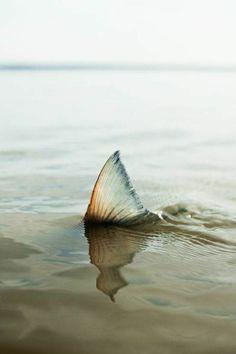 Corey Fishes