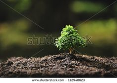 Door Garden Stock Photography   Shutterstock