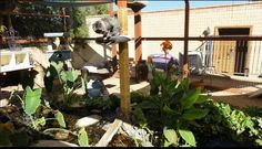 Paradise Valley, Arizona couple Tom and Lix built a deluxe 'Catio' for their 14 cats 1