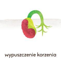 KARTY EDUKACYJNE MONTESSORI - ROZWÓJ FASOLI (7100974215) - Allegro.pl - Więcej niż aukcje.