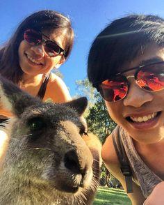 Let's us take a selfie  #goldcoast #australia #currumbinwildlifesanctuary #wildlife #currumbin #animal #selfie #kangaroo #backpackers #backpacking #backpacktravel #eleventravel #jowaytravel #joway #neverj #queensland #lookingforwardjo by joway93 http://ift.tt/1X9mXhV