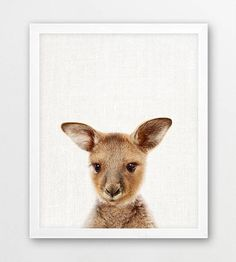 Kangaroo Print, Baby Kangaroo Photography, Australian Cute Animals Art Photo, Nursery Wall Art, Kids Room Decor Color Photo, Printable Art Print out this artwork from your home printer or local print shop to decorate your home or office. This file can be printed on size papers from 4x6, 5x7, 8x10, up to 11x14. You can use any paper you like (matte, textured, gloss etc) and any style frame to mount it to your wall. Makes great last minute gift. ** This is a DIGITAL printable file. NO PHYSI...