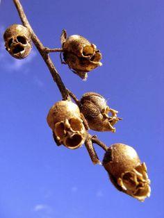 Végétaux anthropomorphes ou zoomorphes