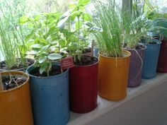 My windowsill garden with up-cycled tin cans as planters.