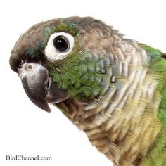 How Do You Know If A Bird Is Sick Recognize the signs of pet bird and parrot illness, and know when to see your avian veterinarian.