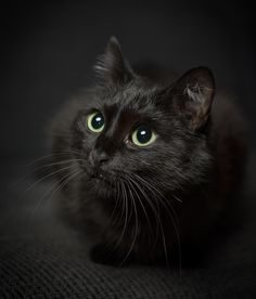 Very interesting post: Black Cat - 34 Pictures. I Love Cats, Crazy Cats, Cute Cats, Funny Cats, Fluffy Black Cat, Fluffy Cat, Black Cats, Animals And Pets, Baby Animals