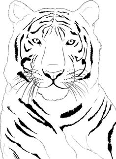 Face Tiger Coloring Page New Pages