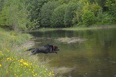 Gårdstunet Hundepensjonat: Flott dag med herlige gjester på 2 og 4 ben! Sando...