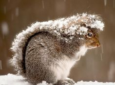 See Becca and Maddie, even squirrels use it as hair. Squirrel tail;)