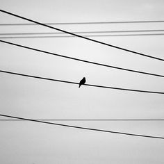 Black and White Bird Photography, Lonely Bird on Wire, Pigeon Art, Pigeon Silhouette, Nursery Art Baby Decor Minimal Photography, Abstract Photography, Black And White Photography, Space Photography, Loneliness Photography, Black And White Birds, Bird Silhouette, Monochrom, Watercolor Bird