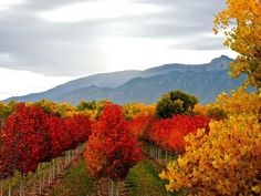 Autumn in Corrales, New Mexico Via Meanwhile in New Mexico on Facebook.