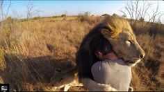 The adoration zoologist Kevin Richardson feels for these big cats —and their obvious feelings for him —will make your heart swell.