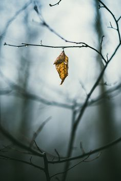 Hanging On | Flickr - Photo Sharing!
