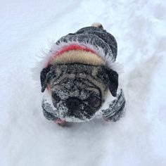 quitobicoke:  Abominable Snow Pug. #puglife #pug #quitobicoke #winter  (at Humber Bay Promenade Park)