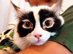 Cat pics cute (Top 5)
