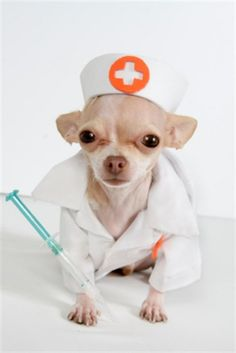 Daily Paws: Pet Insurance in 4 Easy Steps - Pictures: Sleeping Dogs that will make you Laugh - Ask A Pet Pro + More! Dog Doctor, Pet Meds, Medication For Dogs, Cute Chihuahua, Chihuahua Puppies, Pet Clinic, Dog Items, Mundo Animal, Pet Costumes