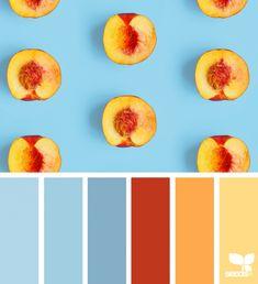 Design Seeds life inside the YES Peach Color Palettes, Blue Colour Palette, Peach Palette, Design Seeds, Red Color Schemes, Color Combos, Café Branding, Pantone, Powder Blue Color