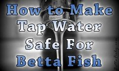 """How To Use Tap Water In A Betta Fish Aquarium Everybody starting out in the betta fish hobby generally asks the same basic questions. These basic questions are by no means considered """"dumb questions"""" as there is no such thing as that sort of question when it comes to making sure ... www.bettafishy.com"""