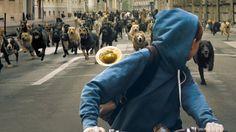 Review: In 'White God,' Man Bites Dog, Dog Bites Back - NYTimes.com