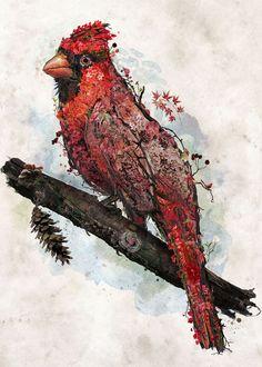 'Northern Cardinal' Poster by Barrett Biggers | Displate Frame Store, Northern Cardinal, Thing 1, Metallic Paper, Bird Art, Medium Art, Watercolor Paper, Original Artwork, Poster Prints