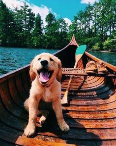 Golden retriever pup AND a cedar canoe? Sign me up! Golden retriever pup AND a cedar canoe? Sign me up! Animals And Pets, Baby Animals, Funny Animals, Cute Animals, Golden Retriever Mix, Retriever Puppy, Golden Retrievers, Cute Puppies, Cute Dogs