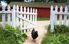 Hottest Photos backyard fence white Suggestions Lawn wood fencing are available lots of forms as well as sizes. Whether you do have a common picket fence, you. Backyard Fences, Chickens Backyard, White Deck, Homemade Deodorant, Homemade Detergent, Potager Garden, Garden Plants, Keeping Chickens, Raising Chickens
