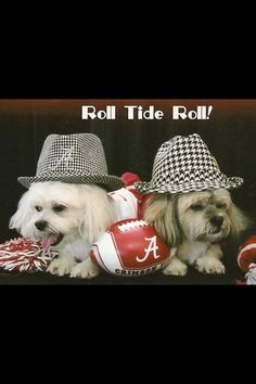 I like these twins better anyways! Crimson Tide Football, Alabama Football, Alabama Crimson Tide, Football Baby, Nick Saban, Cool Pets, Roll Tide, Fur Babies, Cute Animals