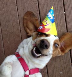 The Party Animal | The 100 Happiest Dog Pictures Of All Time