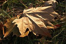 Herfst - Wikipedia