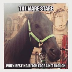 Only equestrians arent afraid to face that look - Horses Funny - Funny Horse Meme - - Only equestrians arent afraid to face that look The post Only equestrians arent afraid to face that look appeared first on Gag Dad. Funny Horse Memes, Funny Horse Pictures, Funny Horses, Cute Horses, Funny Animal Memes, Pretty Horses, Horse Love, Horse Girl, Beautiful Horses