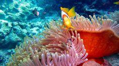 κινουμενες εικονες με θαλασσα - Αναζήτηση Google Fish, Pets, Google, Animals, Animaux, Animal, Animales, Ichthys, Animais