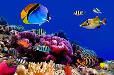 Las Islas Maldivas nos ofrecen toda esta fauna marina y mucho más. ¿Quieres disfrutar de las mejores playas y el relax más merecidos? ¡No dejes de viajar!
